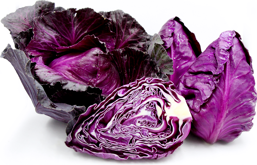 Red Conehead Cabbage