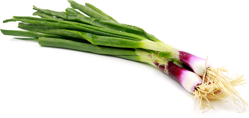 Red Spring Onions picture