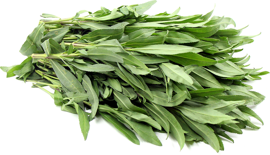 Texas Tarragon picture