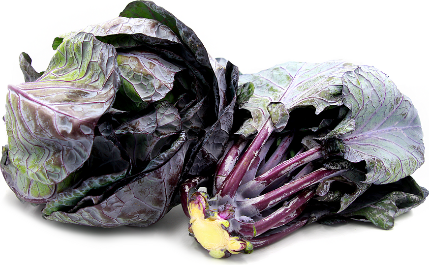 Purple Brussels Sprouts Leaves