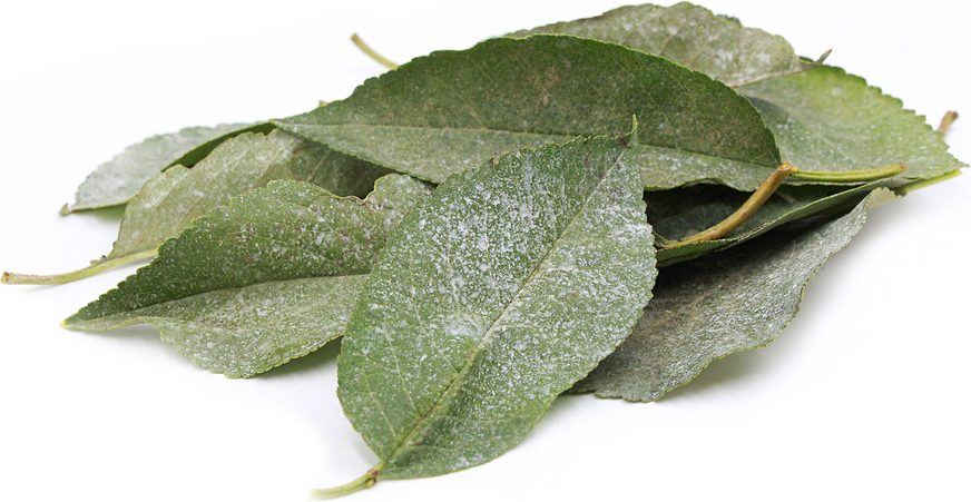 Sour Cherry Leaves picture