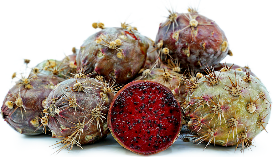 Organ Pipe Cactus Fruit picture