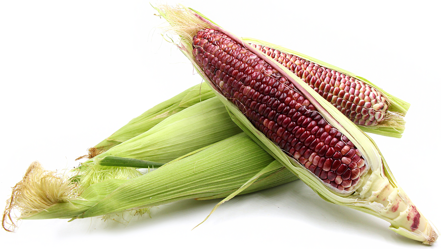 Ruby Red Corn