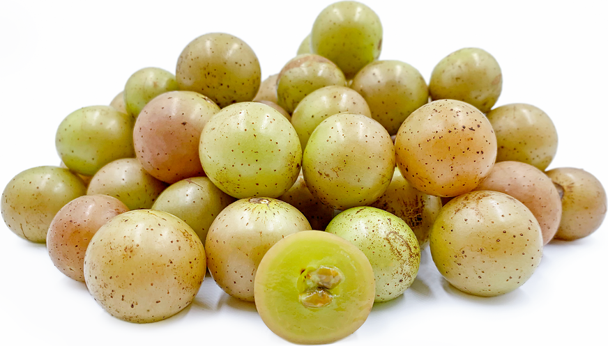 Scuppernong Muscadine Grapes