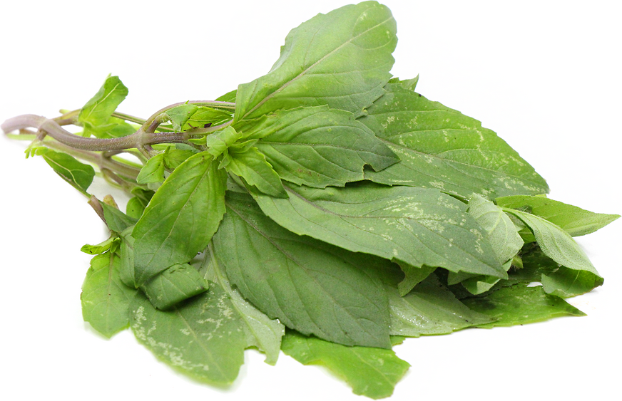 Lime Basil picture
