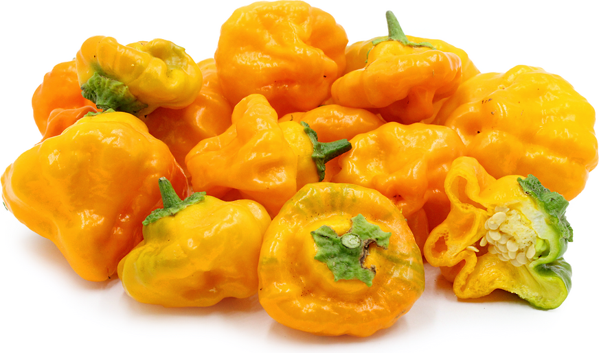 Jamaican Yellow Mushroom Chile Pepper picture