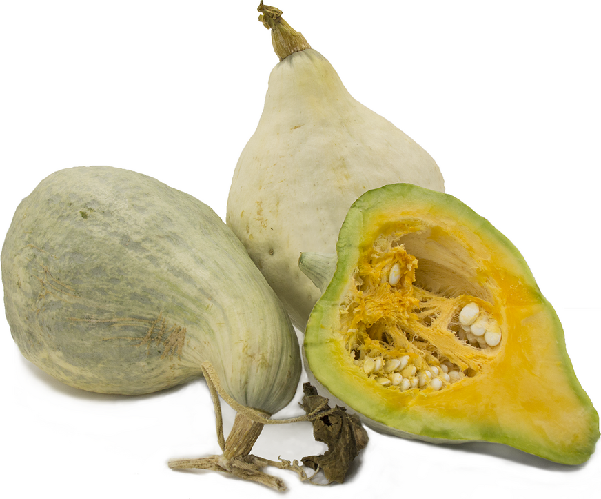 Blue Hubbard Squash Information and Facts