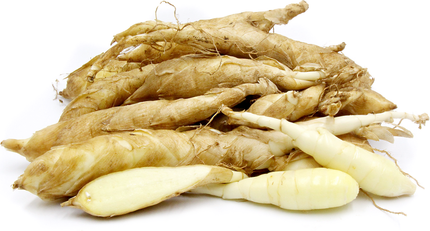 Arrowroot picture
