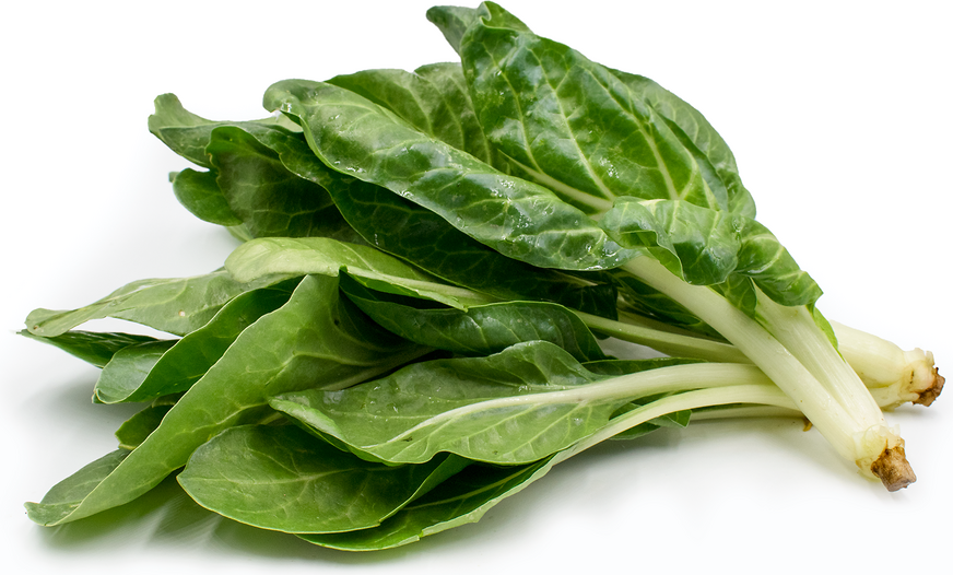 barese swiss chard information and facts