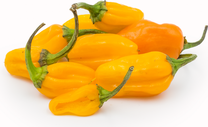 Datil Chile Pepper picture