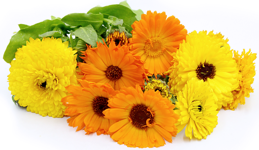 Calendula Flowers picture
