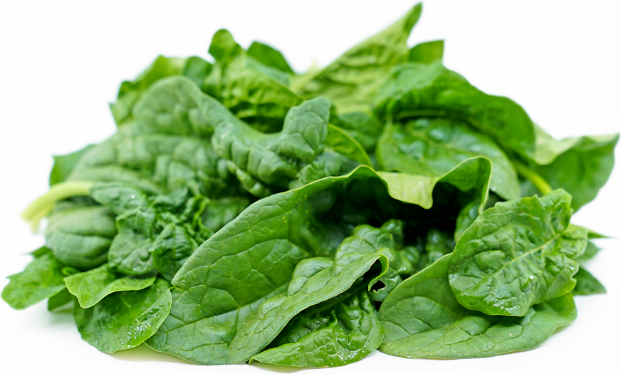 Savoy Spinach picture