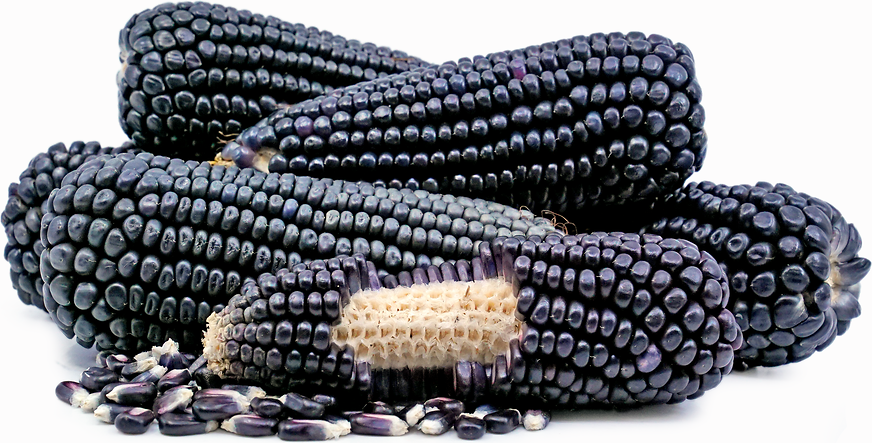 Black Corn picture