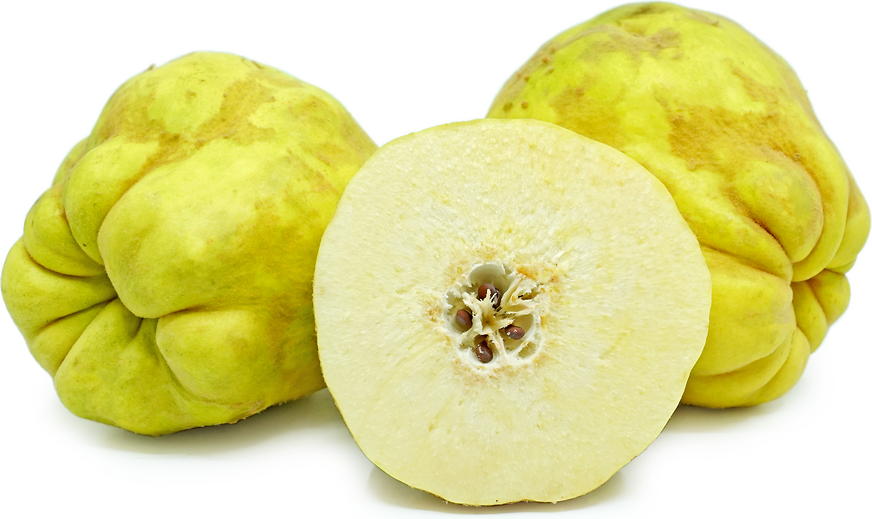 Cooke's Jumbo Quince picture