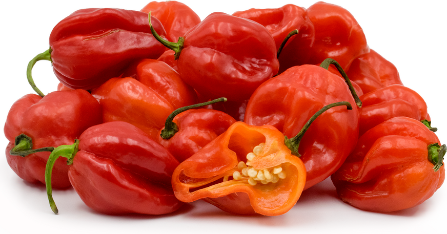 Red Scotch Bonnets Chile Peppers