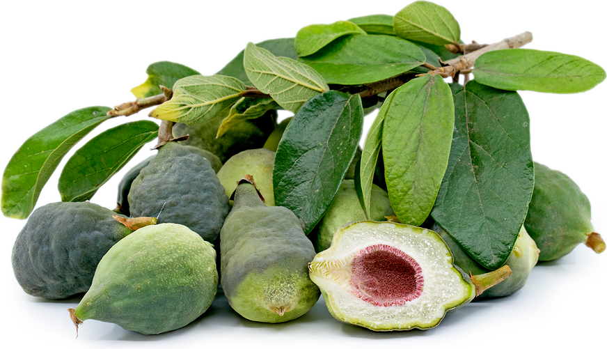 Taiwanese Jelly Figs Information and Facts