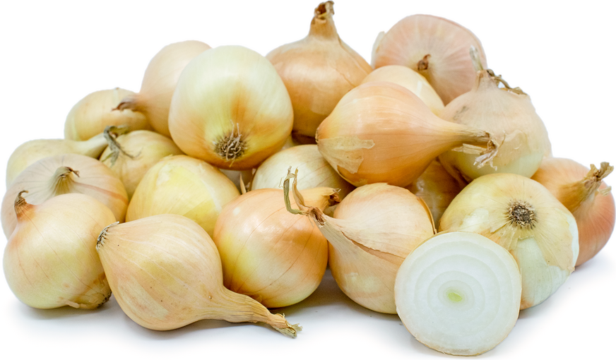 Yellow Boiling Onions picture