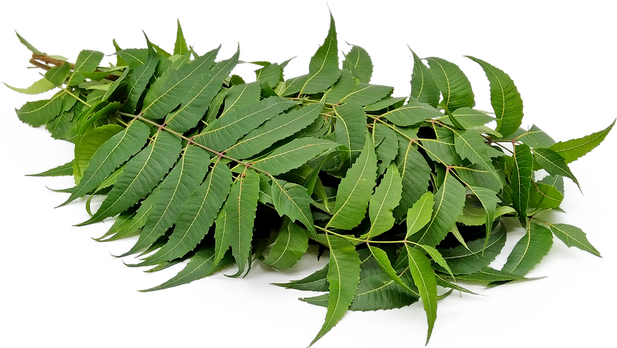 Neem Leaves picture