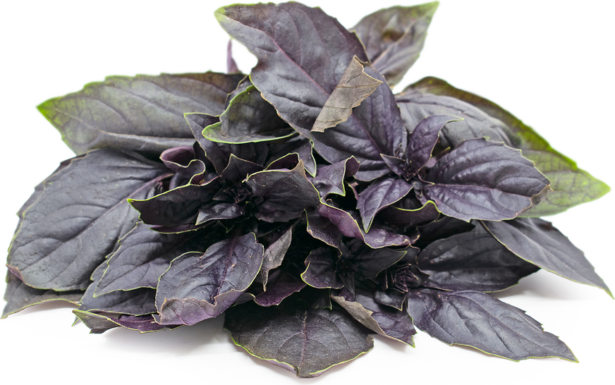 Red Rubin Basil picture
