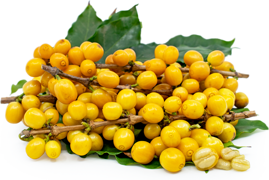Gold Coffee Berries picture