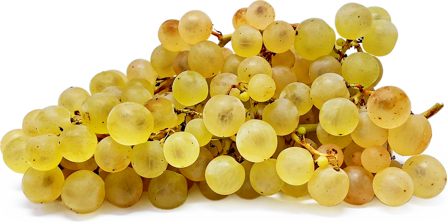 Mosaic Grapes picture