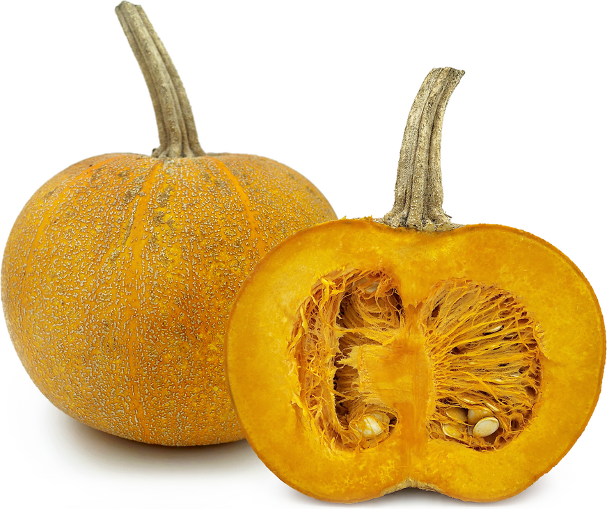 Winter Luxury Squash picture