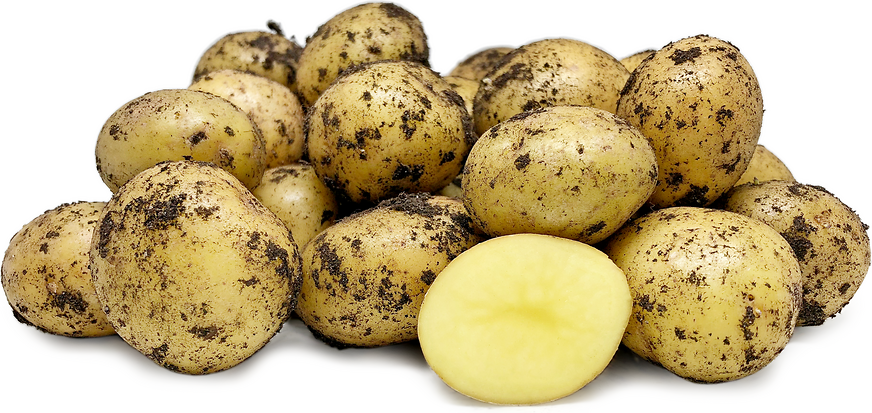 Vildmose Potatoes picture