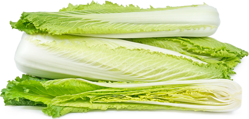 Long Napa Cabbage picture