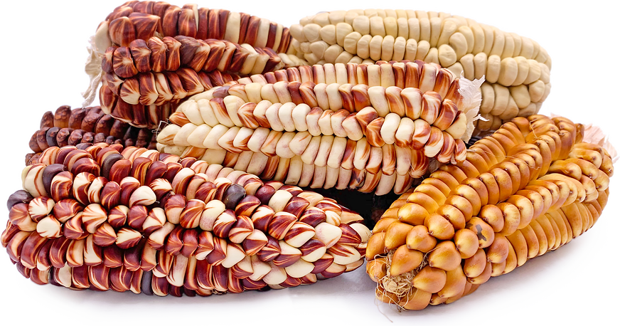 Colored Peruvian Corn picture