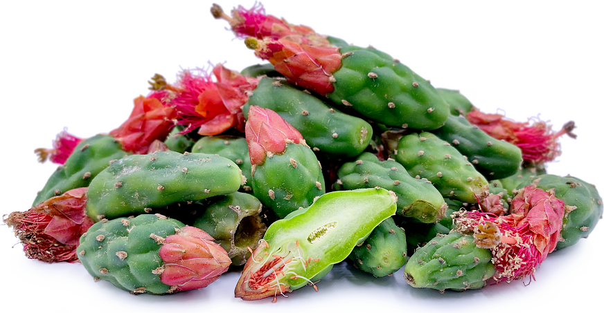Nopales Cactus Buds picture