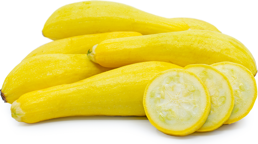 Yellow Straightneck Squash picture