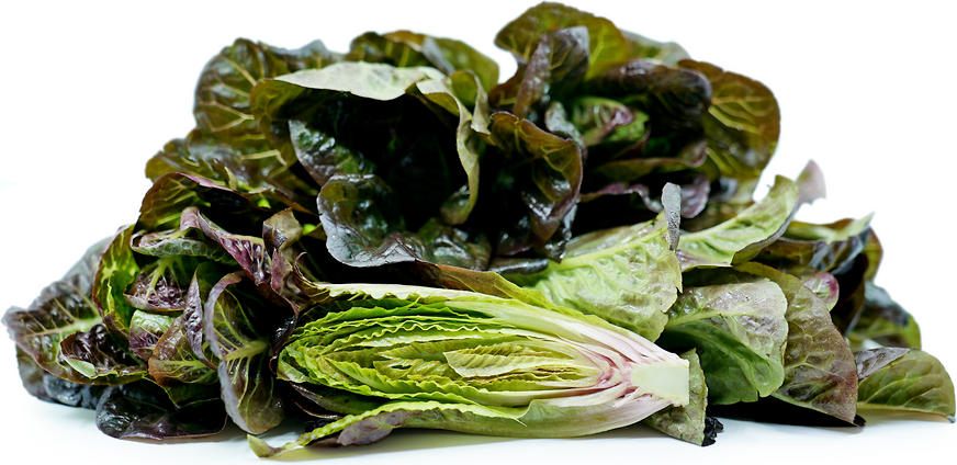 Red Breen Lettuce picture