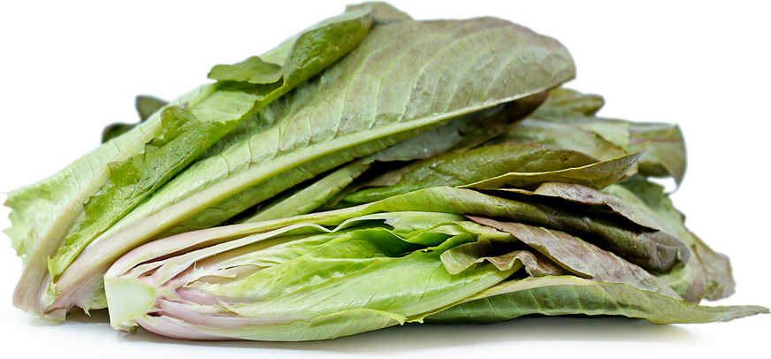 Rogue Dhiver Lettuce picture