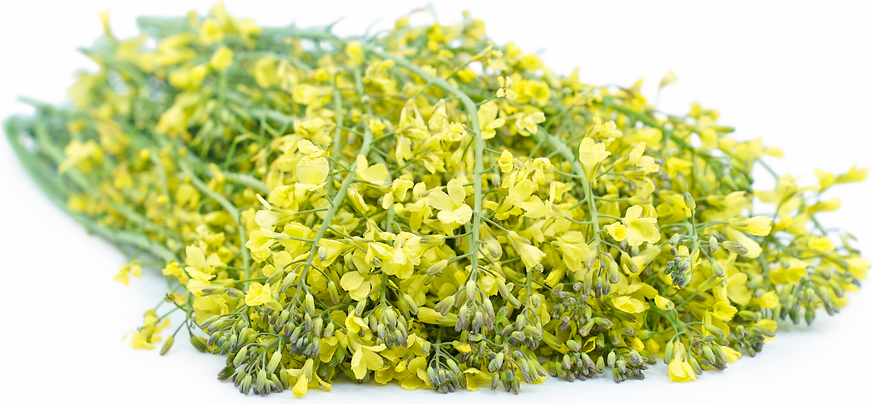Broccolini Flowers picture