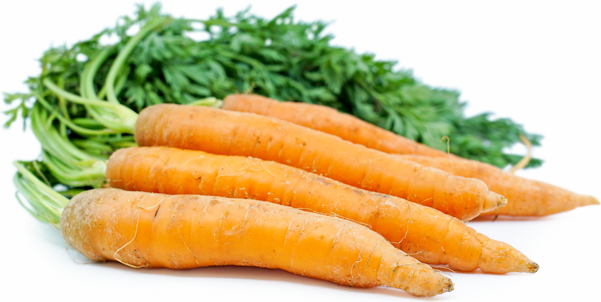 Orange Bunched Carrots picture