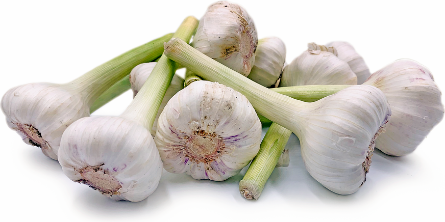 Egyptian Garlic picture