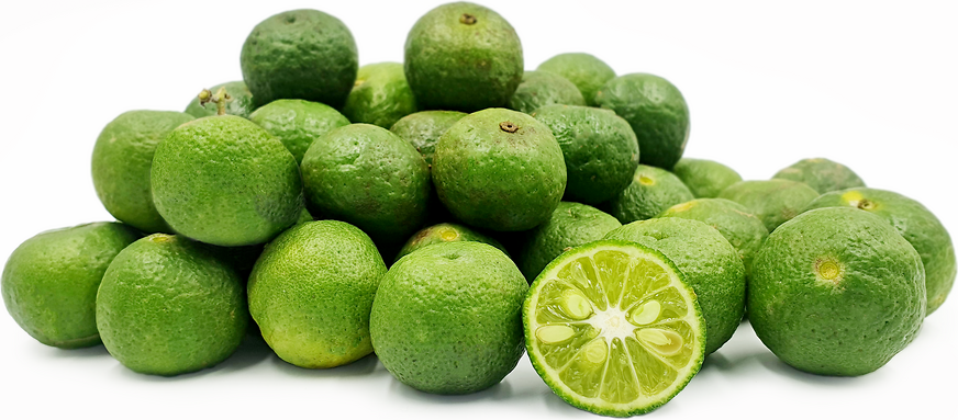Omura Limes picture
