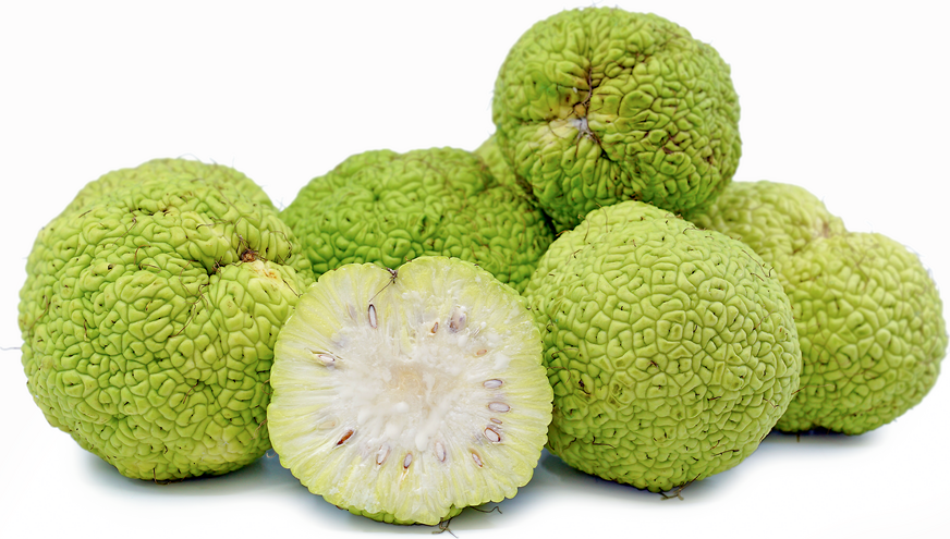Osage Oranges picture