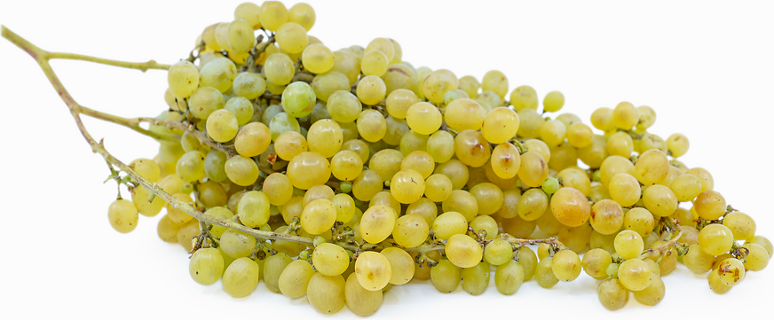 Nehelescol Grape picture