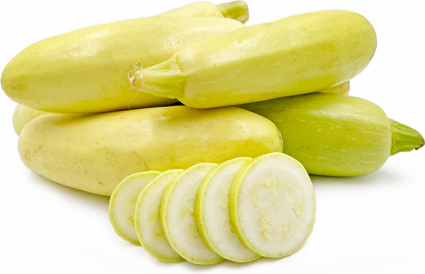 Russian Yellow  Squash picture