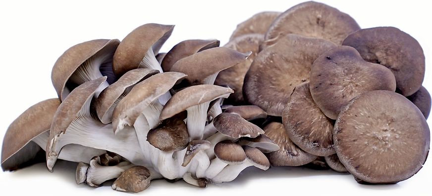 Black Oyster Mushrooms picture