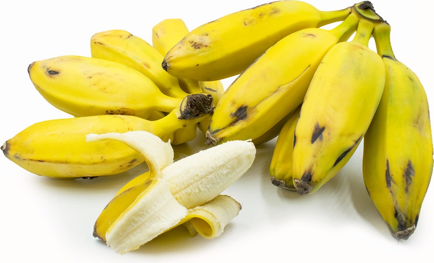 Image result for Burro banana