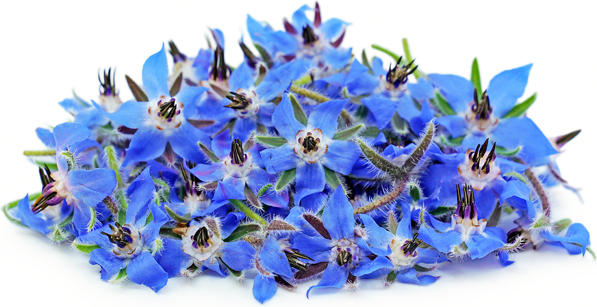 Borage Flowers picture