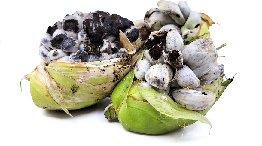 Huitlacoche Mushrooms