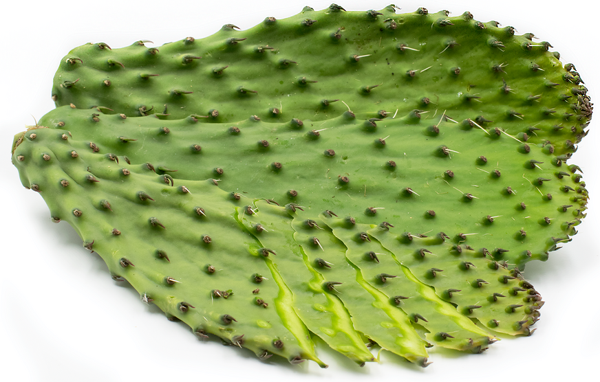Nopales Cactus Leaf Information, Recipes and Facts