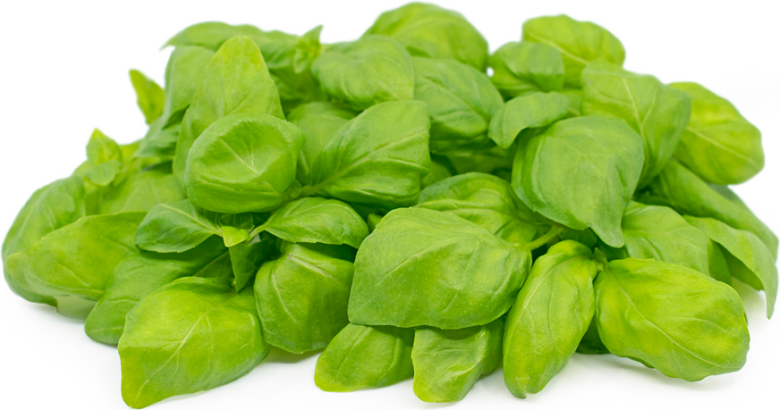 Petite® Basil picture