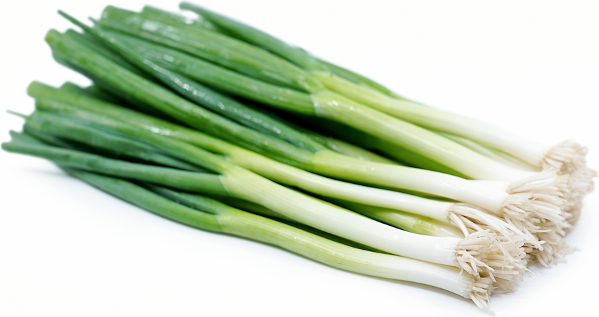 Green Onions Information, Recipes and Facts