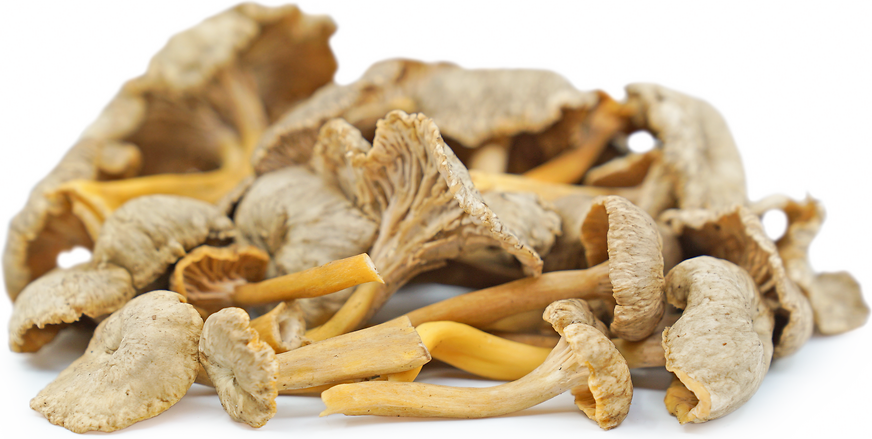Yellow Foot Chanterelle Mushrooms