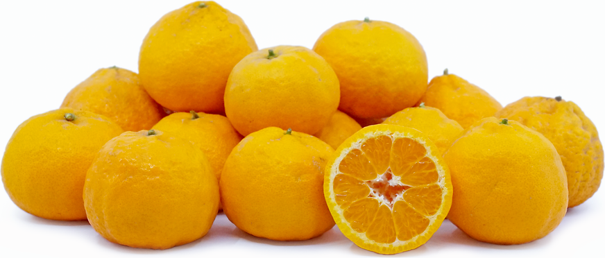 Gold Nugget Tangerines
