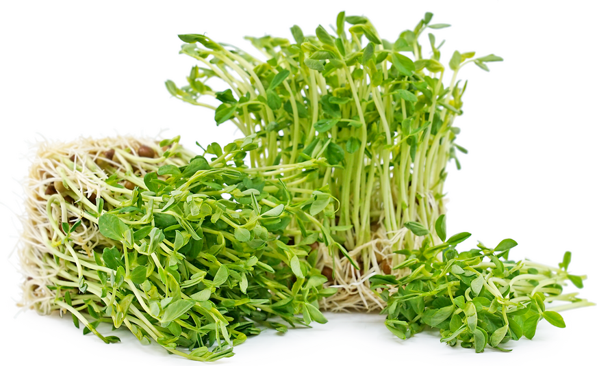 Organic Green Pea Shoots picture